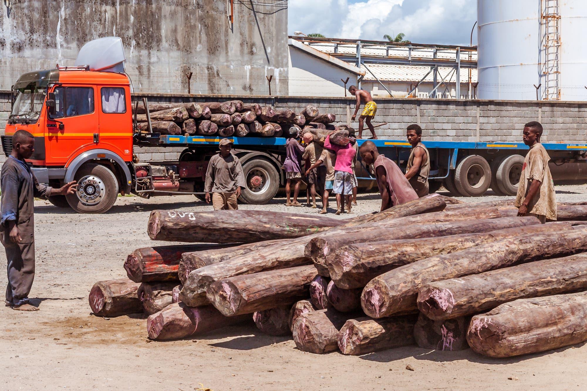 Export von Palisander aus Madagaskar