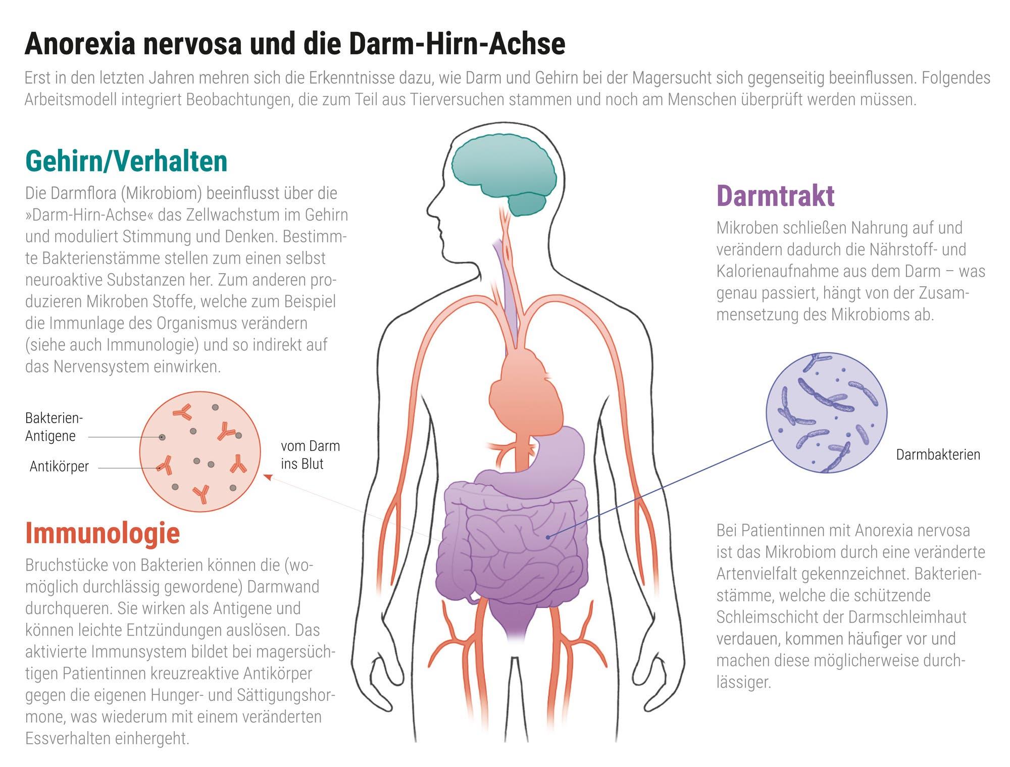 Anorexia nervosa und die Darm-Hirn-Achse