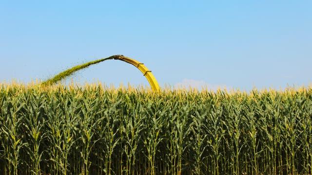 Große Teile der amerikanischen Maisernte landen mittlerweile im Tank.