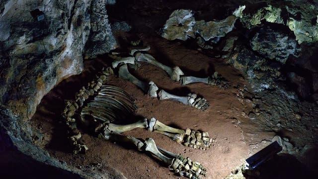 Skelett eines Mammutjungtiers in einer Karsthöhle