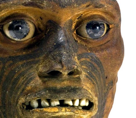 Tätowierter Maori-Schädel