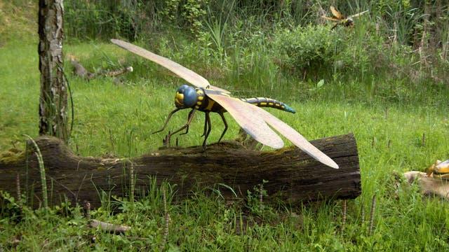 6 Riesenlibellen - Monster der Urzeit
