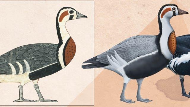 Gänse von Meidum (links die unbekannte Art, rechts eine Rothalsgans)