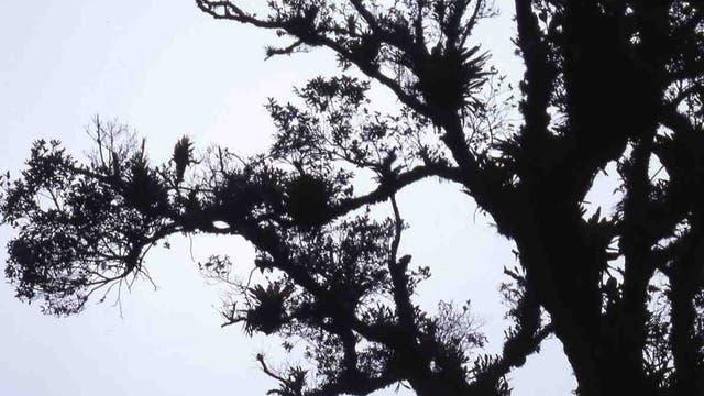 Mit Epiphyten beladener Baum