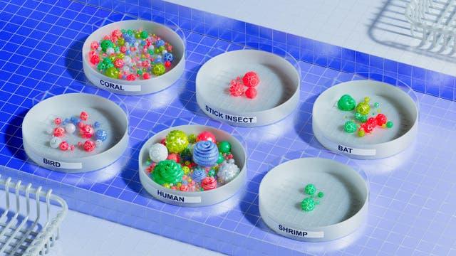 Plastikmodelle für die Mikrobiome verschiedener Tiere