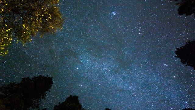 Bäume unter Sternenhimmel