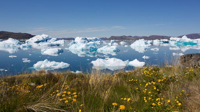 Die Erderwärmung läuft in Grönland schneller ab als an vielen anderen Stellen der Erde. Wo vor wenigen Jahren noch Gletscher lagen, wachsen heute Gräser und Blumen.