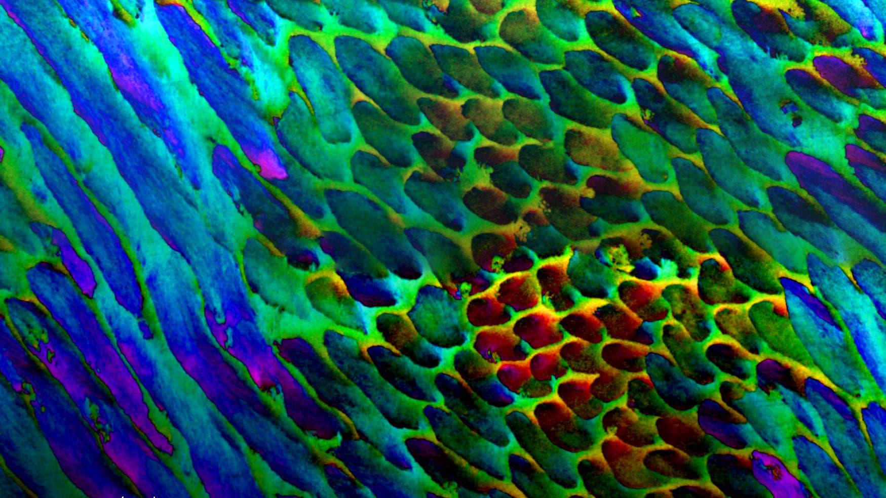 Ein farbcodiertes Bild, in dem die verschiedenen Farben die Ausrichtung feinster Kristalle anzeigen