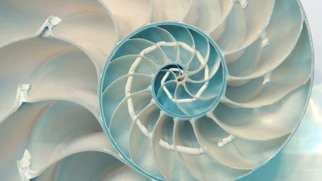 Goldene Spirale im Nautilus