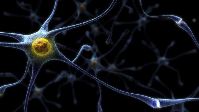 Hirnzelle in künstlerischer Darstellung