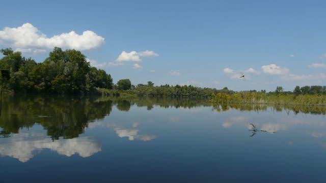 Ein Seeufer unter blauem Himmel.
