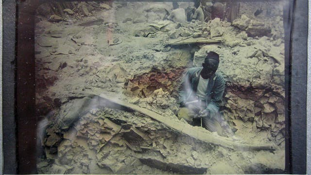 Fossiliengrabung am Tendaguru zwischen 1909 und 1913. Der Text auf dem Diapositiv lautet: »Oberaufseher präpariert große Rippe.«