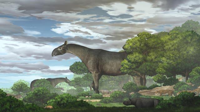 Riesennashörner der Gattung Paraceratherium in ihrem Lebensraum
