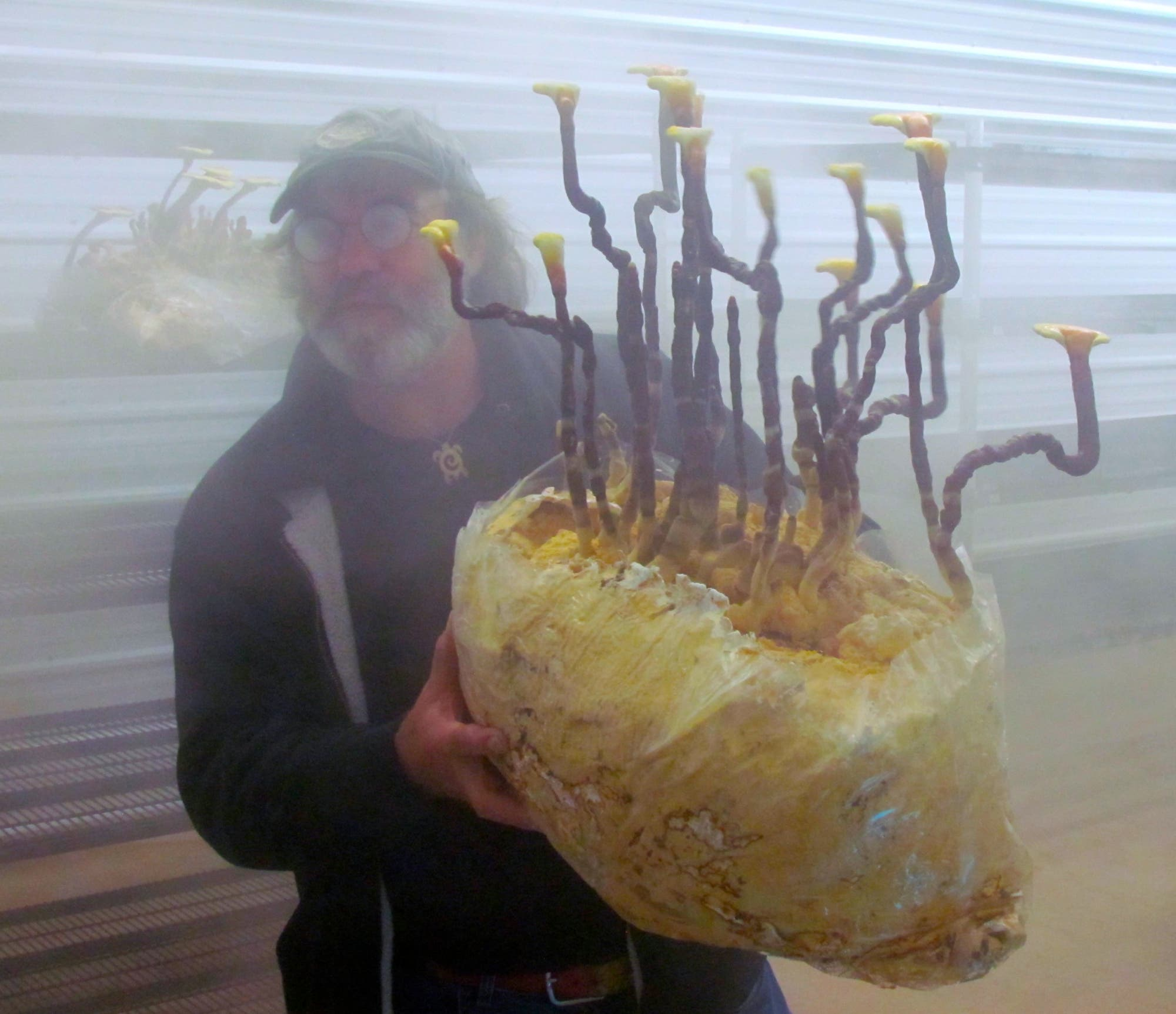 Paul Stamets mit riesigem Ganoderma lucidum Reishi Pilz