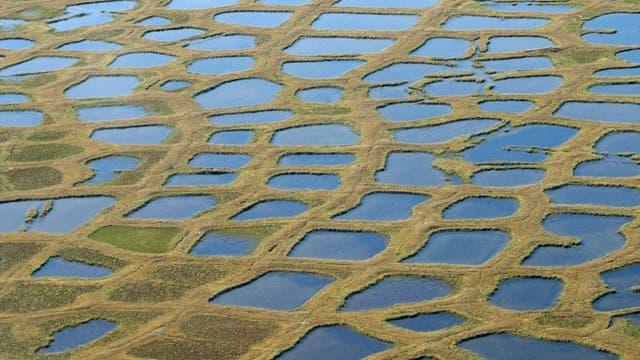 typische Polygonstrukturen in Permafrostböden