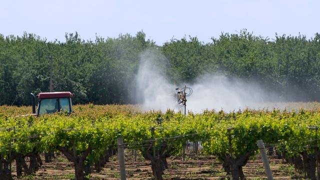 Pestizideinsatz im Weinberg