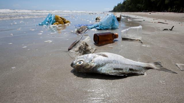 Plastimüll verschmutzt einen Strand - und belastet die Tierwelt der Meere.