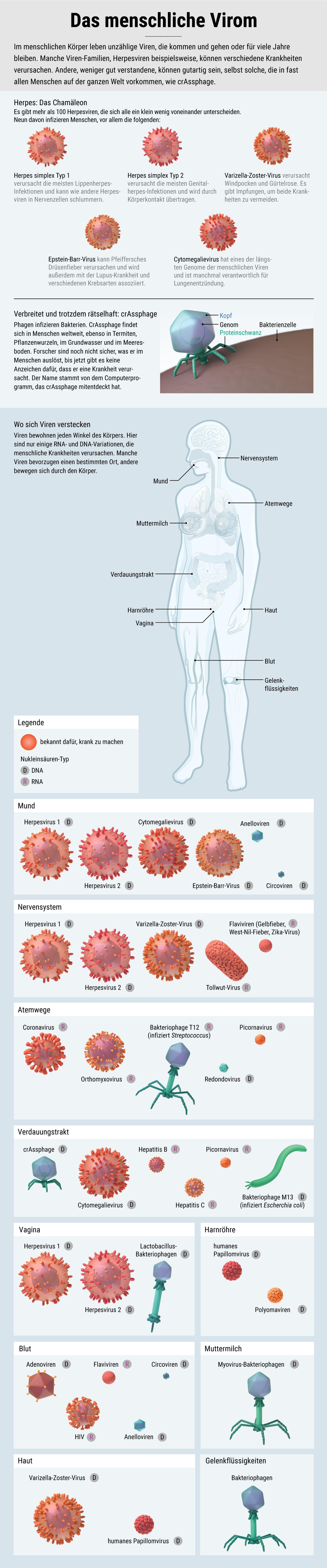 Das menschliche Virom