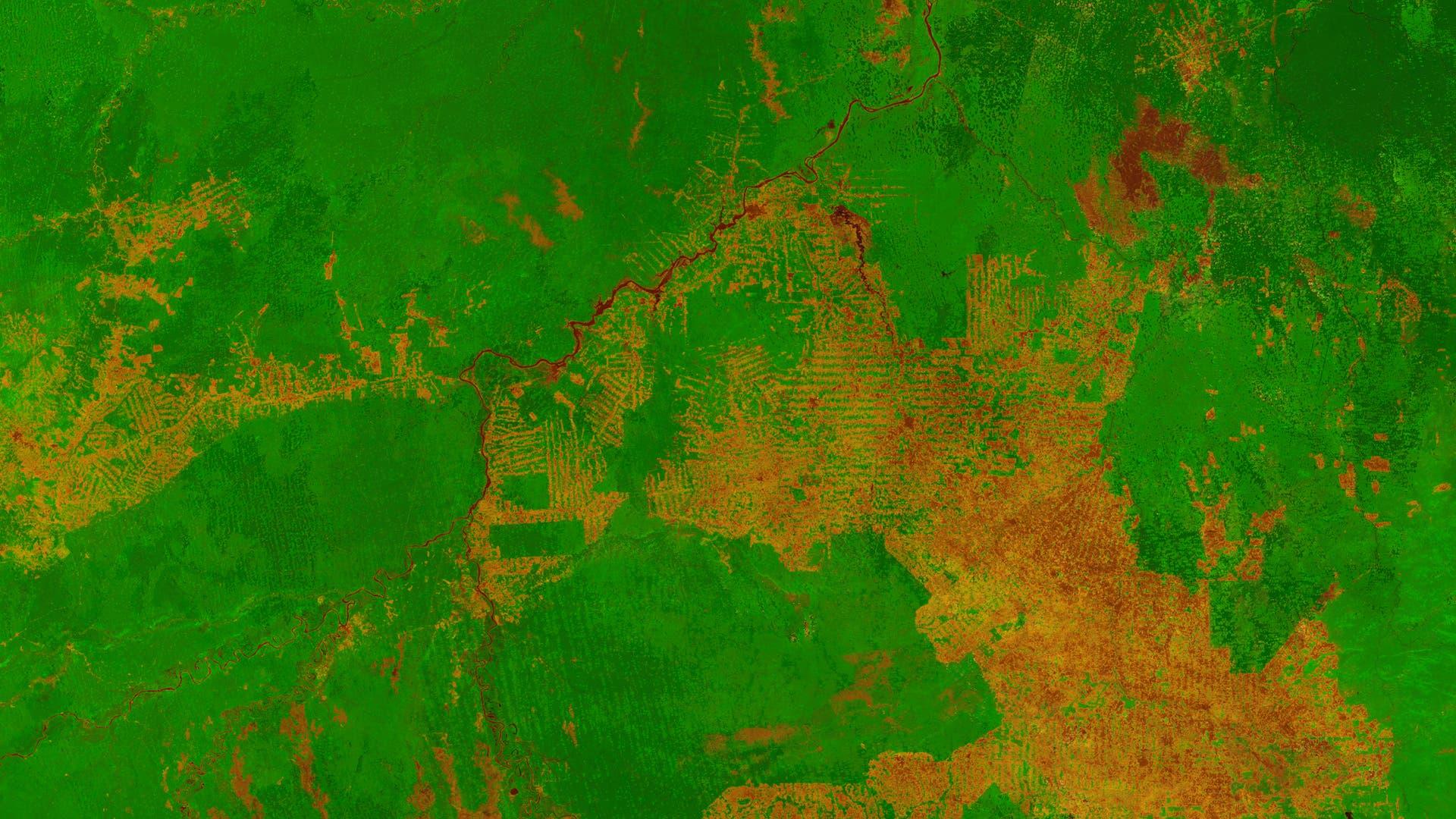 Satellitenbild Vegetation Brasilien