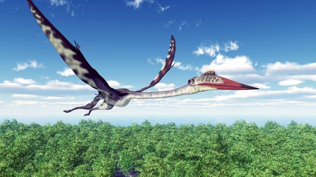 Ein Pterosaurier namens Quetzalcoatlus