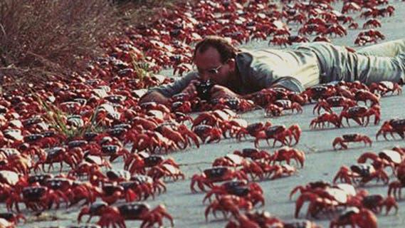 Rote Armee: Krabben auf Wanderschaft