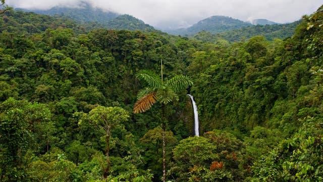 Regenwald in Costa Rica- eine grüne Vorzeigenation?
