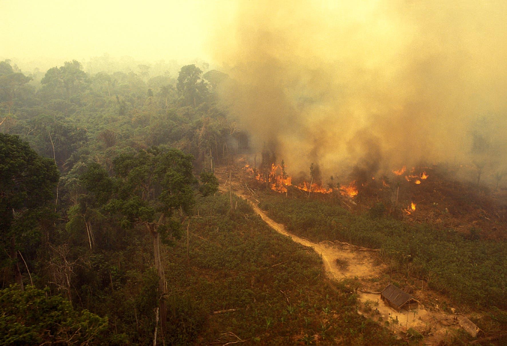 Wenn der Regenwald mit Feuer gerodet wird, entstehen große Mengen Kohlendioxid, die den Klimawandel antreiben. Außerdem schwächt sich dadurch der Wasserkreislauf vor Ort ab: Dürren werden häufiger und können auch entfernte Gebiete in Südamerika betreffen.