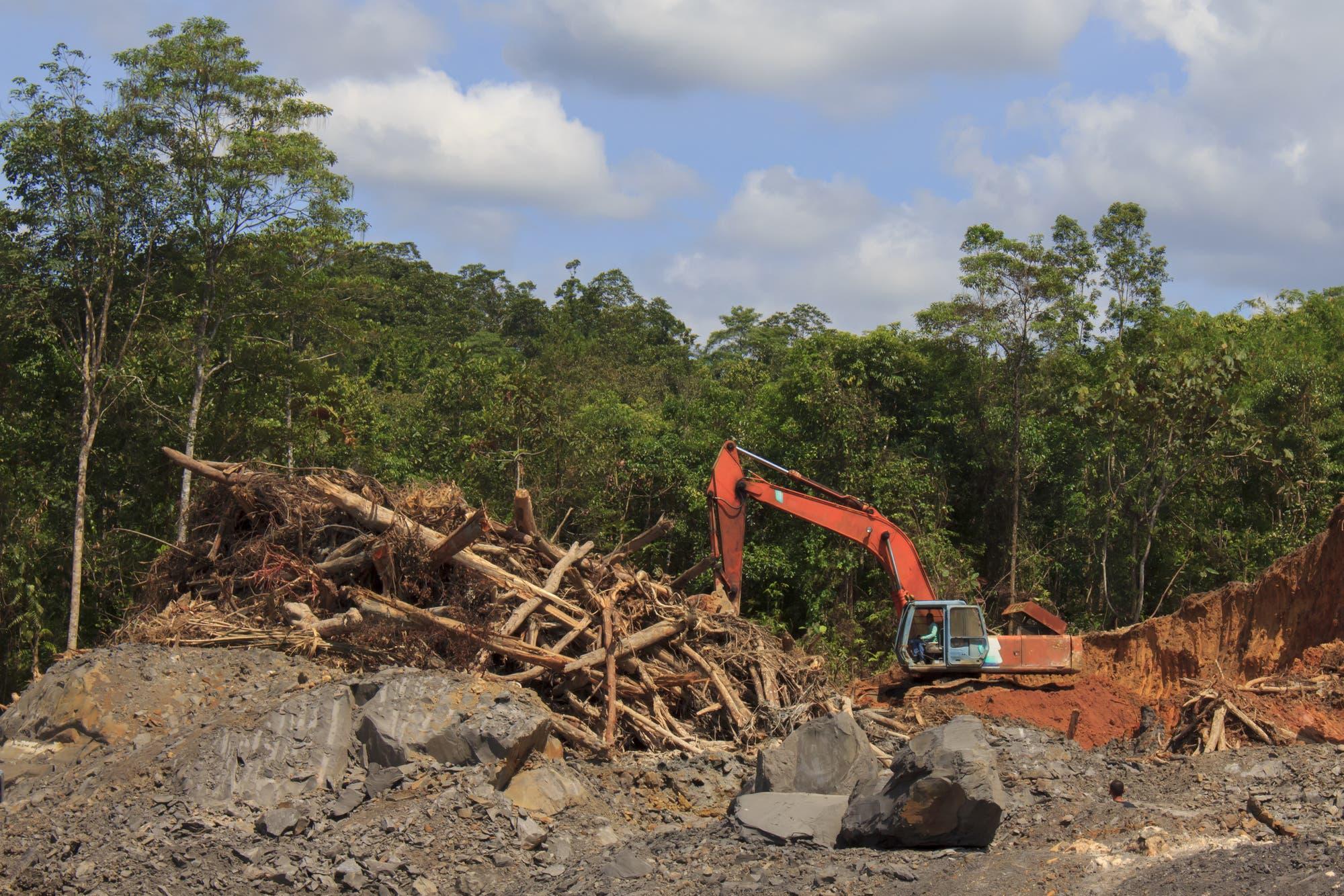 Zerstörung des Regenwaldes