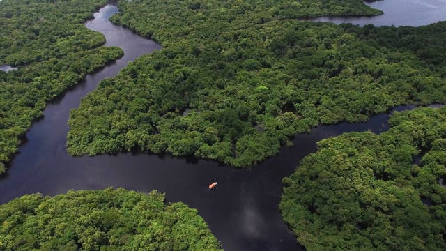 Intakter Regenwald in Brasilien