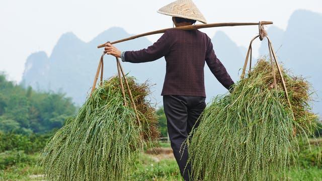 Reisanbau ist Gemeinschaftsaufgabe