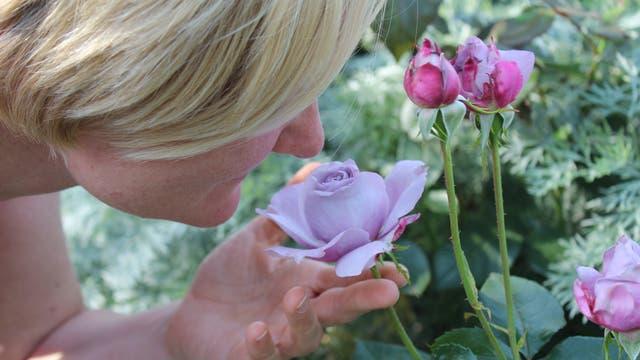 Frau riecht an Rosenblüte