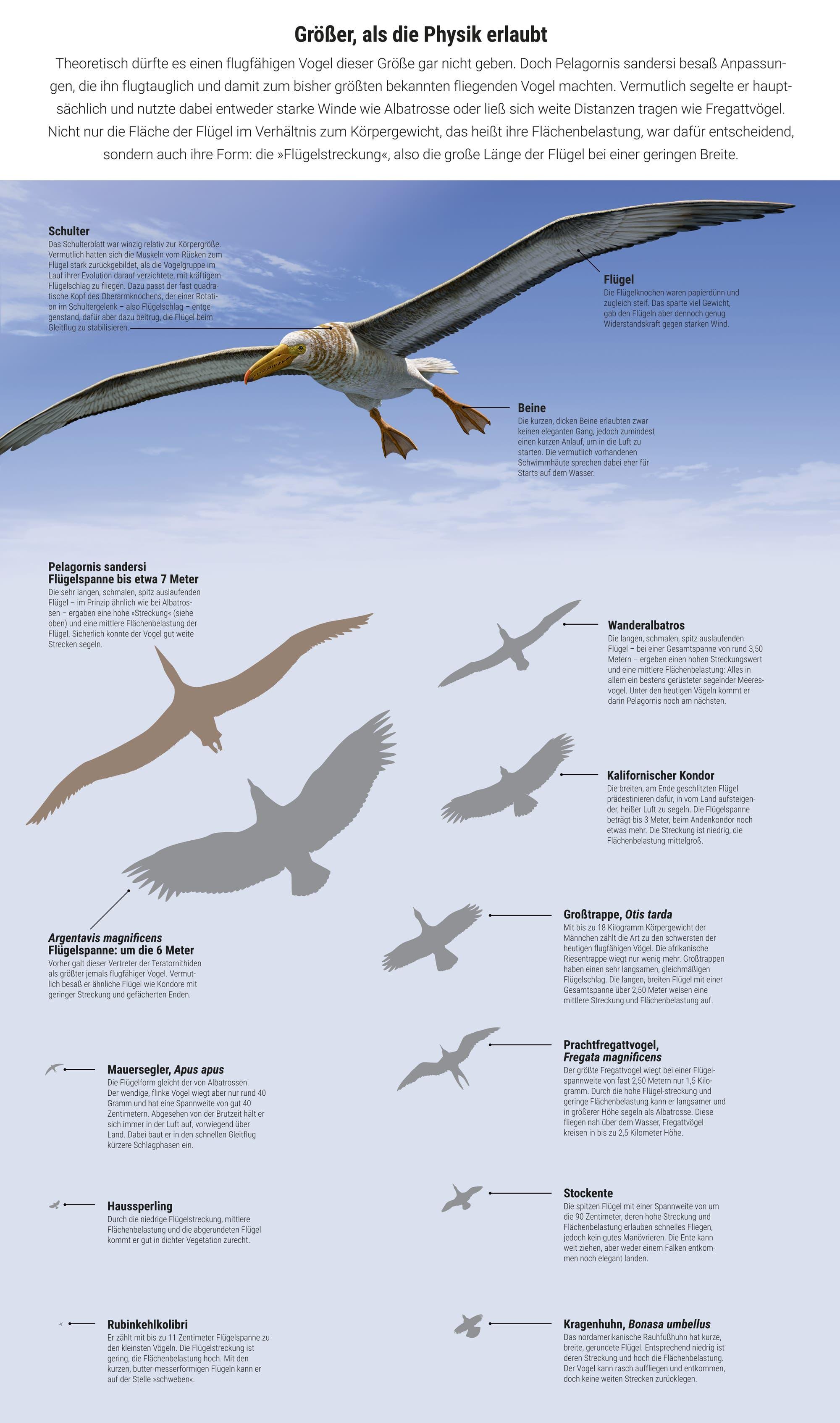 Riesenvögel und moderne Vögel im direkten Vergleich