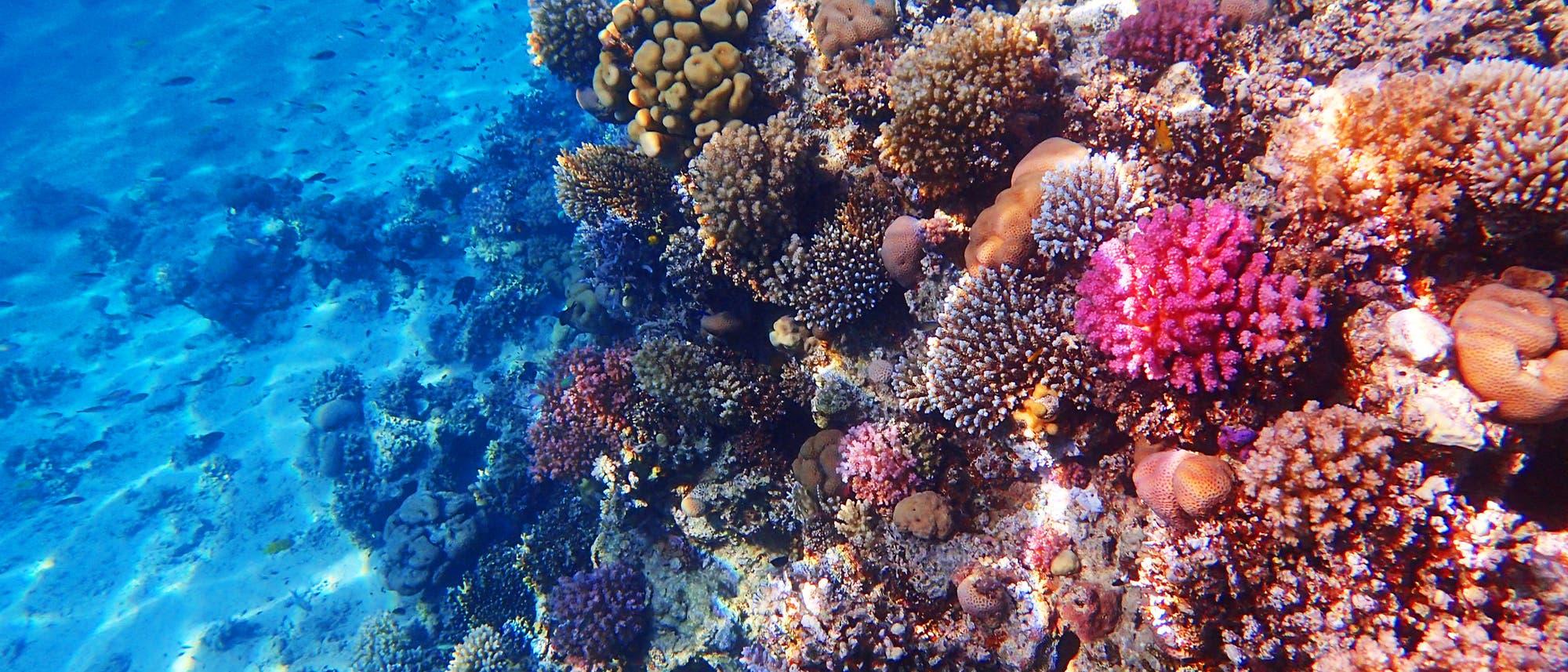 Bedrohte Unterwasserwelt: Korallen im Roten Meer