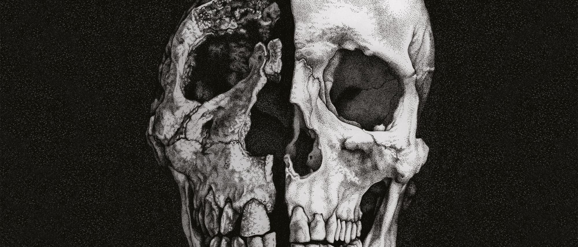 Schädel von Homo ergaster und Homo sapiens