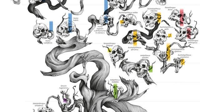 Der Stammbaum des Homo sapiens