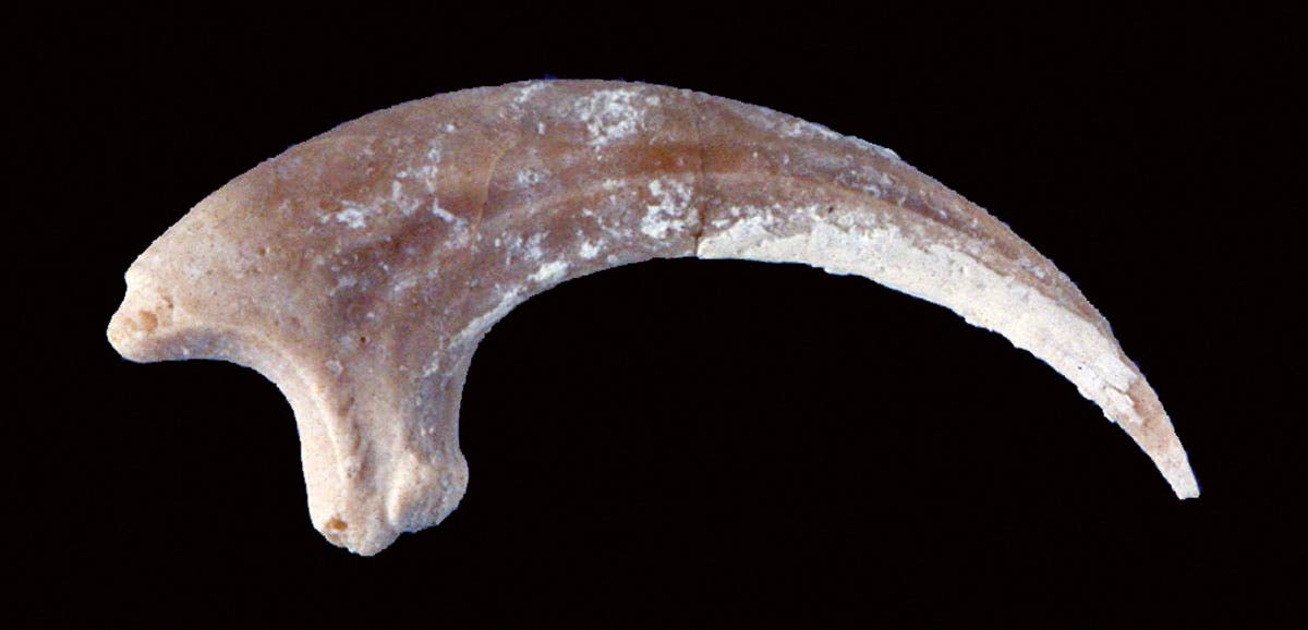 Zehenknochen