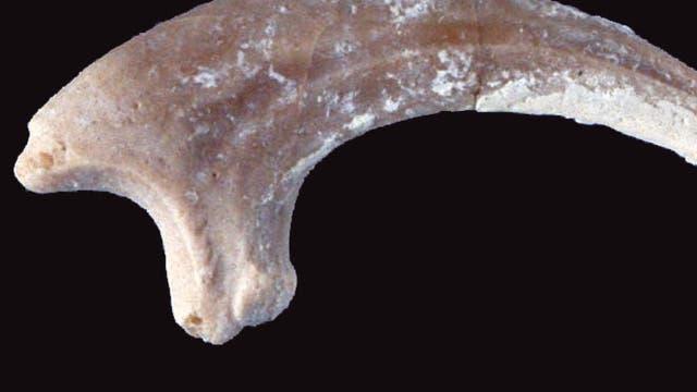 Zehenknochen des Zehenknochens Rahonavis ostromi