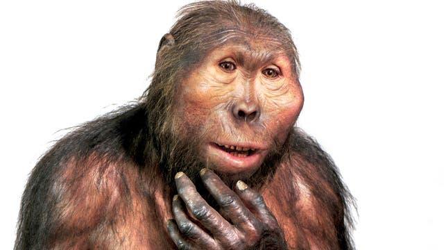 Paranthropus boisei Modell