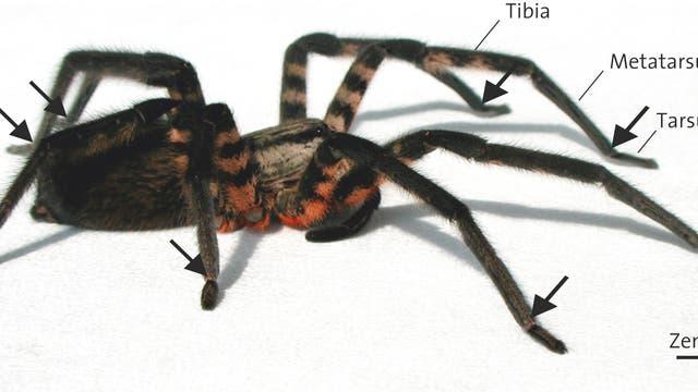 Spinne Vibrationssensoren