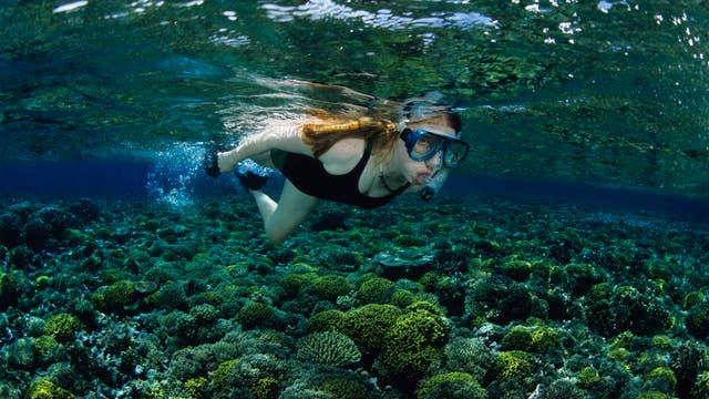 Junge Frau schnorchelt über einem Korallenriff
