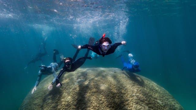 Taucher schwimmen über der Rekordkoralle