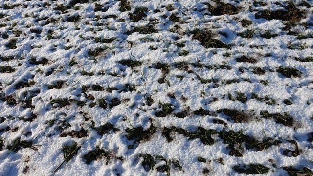 Zwischen Schnee und Eis