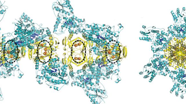 Längs- und Querschnitt durch den stabförmigen Proteinkomplex