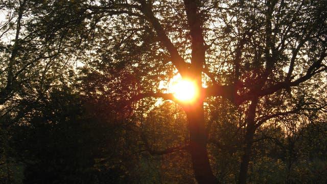 Sonne überstrahlt Baum