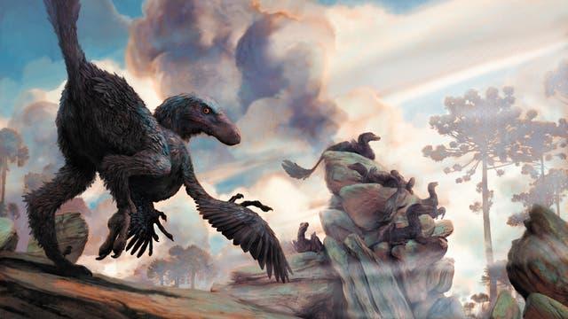 Der eineinhalb Meter lange Dromaeosaurier Zhenyuanlong suni, ein Verwandter von Velociraptor, konnte mit seinen kleinen Flügeln an den kurzen Armen nicht fliegen.