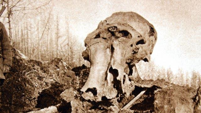 Beresowka-Mammut