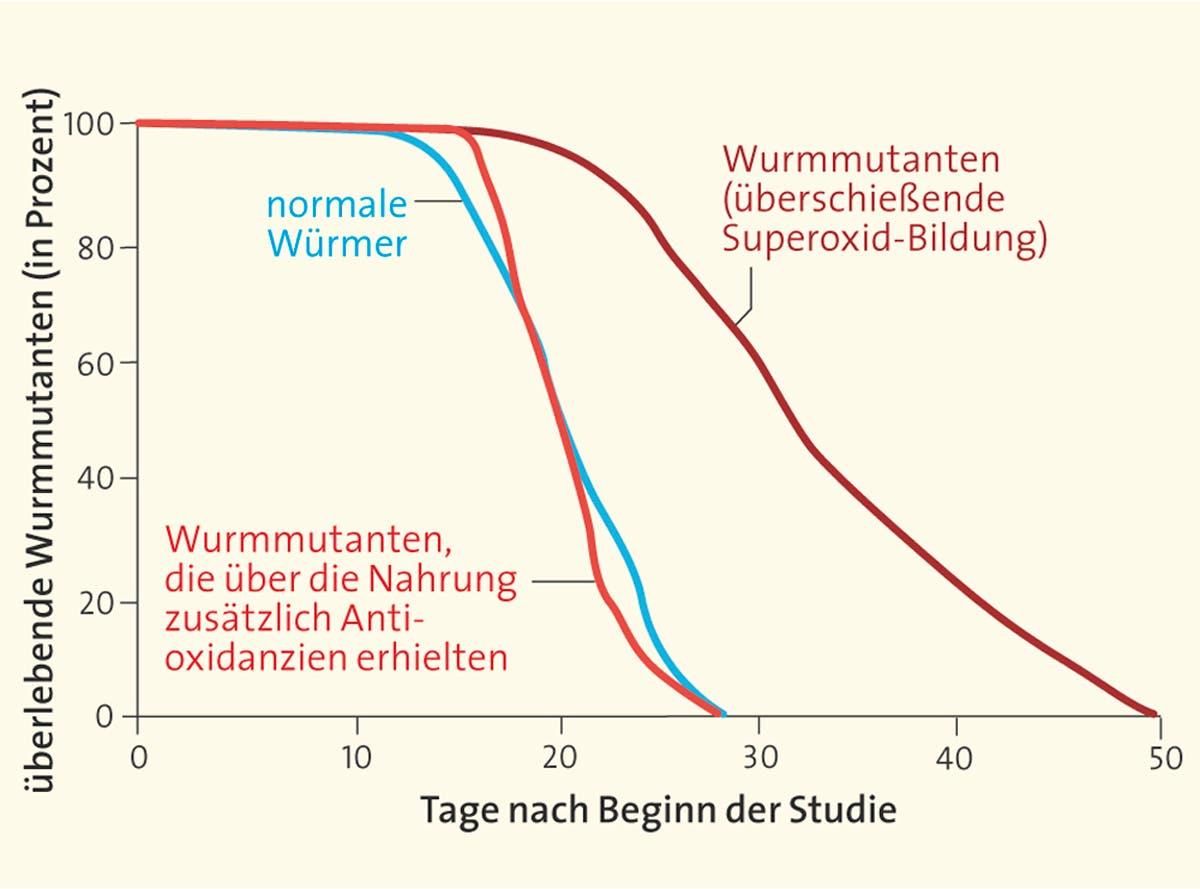 Studien an Wurmmutanten
