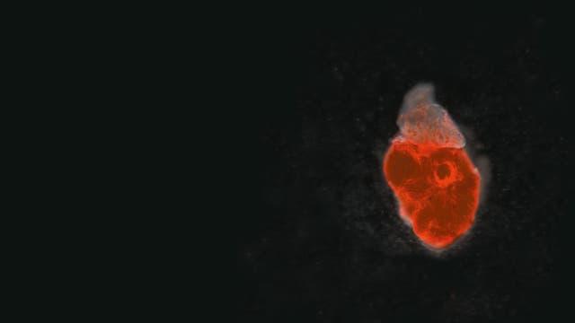 Regeneration von Gewebe