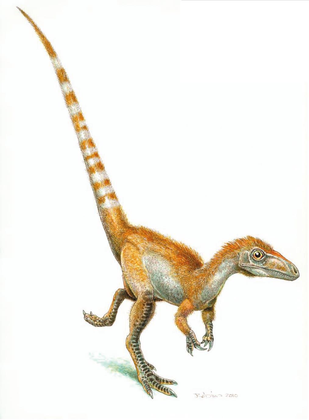 Rekonstruktion von Sinosauropteryx