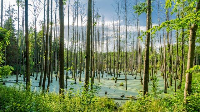 Feuchtgebiete sind Kohlenstoffsenken, werden sie entwässert, wird der Kohlenstoff jedoch massiv freigesetzt